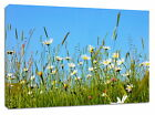 Stretched Box Canvas Daisy Meadow Framed Art Picture Print