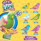 Little Live Pets Bird Cage Birds Variations Available