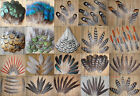 Wholesale all kinds of different beautiful natural pheasant feather Party DIY
