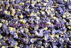 Malva, Blue - whole - Potpourri and Nature Crafts, Soap, Tea 6-4-2-1 oz