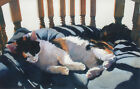 "Mari Ann Figgins ""Callie's Chair"" Original Watercolor Painting, cat sleeping OBO"