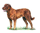 Chesapeake Bay Retriever Hunting Bird Game Dog Truck Boat Camp RV Decal Sticker