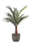 Best Artificial 4ft 120cm Potted Phoenix Palm Tree Tropical Office Conservatory