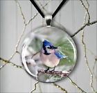 BIRD BLUE JAY IN SNOW PENDANT NECKLACE  -g4v5n