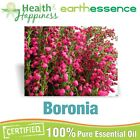 earthessence BORONIA ~ CERTIFIED 100% PURE ESSENTIAL OIL ~ Aromatherapy Grade