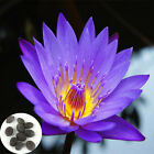 Charm 10 Pcs Seeds Lotus Water Lily Flower Bowl Pond Fresh Perfume Flower Seed