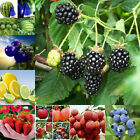 Various Heirloom Garden Vegetable Fruit seeds Non-GMO seeds Organic Plant New