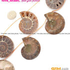 25-30mm Beautiful Conch Fossil Gemstone For J ewelry Making Loose Beads 7 pcs