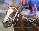 """Rags To Riches Belmont Stakes #2 Photo 8"""" x 10 - 24"""" x 30"""""""