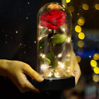 Beauty And The Best red Rose Glass Dom Valentines's Gift Flowers Lamp Light
