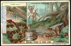 Poisonous Snakes South American Bushmaster Amazon Natives 1902 Trade Ad Card