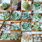 Внешний вид - Artificial Succulents Fake Plastic Floral Plant Cactus Garden Home Office Decor