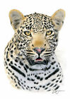 AFRICAN LEOPARD colour pencil drawing print A4 / A3 signed by UK artist artwork