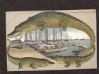 Внешний вид - ALLIGATOR BORDER KEY WEST FLORIDA THE SPONGE FLEET POSTCARD COPY