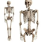 Poseable Full Life Size Human Skeleton Prop Halloween Party Decor