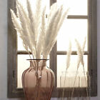 15pcs Natural Dried Pampas Grass Reed Home Wedding Flower Bunch Decoration