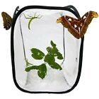 Pop Up Net Insect Cage - For Butterflies, Moths, Stick Insects, Caterpillars