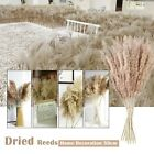 Natural Dried Flowers Brown Bouquet Boho Decoration Home Bedroom Living Room50cm