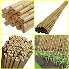6FT Thick Quality Heavy Duty Bamboo Canes Strong Garden Plant Support Pole Stick