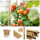 5FT Heavy Duty Bamboo Canes Thick Quality Strong Garden Plant Support Stick Pole