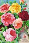 Colorful Seed Packet Roses Cotton Block Multi Sizes (1A