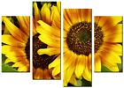 SUNFLOWER Yellow Large  wall art canvas print artwork home living room kitchen