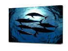 DOLPHIN MODERN ART CANVAS A3,A2,A1,A0 ART PRINT BOXED  EZ0143