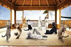 New Feline Enlightenment Yoga Cats Poster