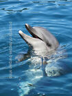 BEAUTIFUL High Quality Original Photo Print   DOLPHIN
