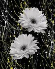 Black White Yellow Daisy Flowers Bathroom Bedroom Wall Art Decor Matted Picture