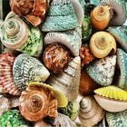 SEA SHELLS COLORFUL BEACH HOME DECOR #2 COASTERS  SET U PICK SET SIZE