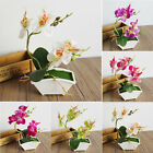 Artificial Butterfly Orchid Flower leaves& Flowerpot Home Decor Fake Flowers