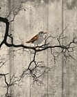 Rustic Bird On Tree Branch Wall Art Home Decor Brown Wall Art Picture