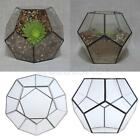 Clear Glass Pentagon Ball Geometric Terrarium Tabletop Succulent Plant Planter
