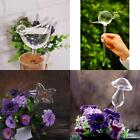 Glass Plant Flowers Water Feeder Self Watering Simple Designs Waterer 3Types
