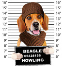 Beagle Mug Shot Size Youth Small to 6 X Large T Shirt Pick Your Size image