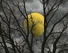 Black White Yellow Wall Art Moon Tree Decor Bedroom Yellow Wall Art