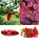 9BC3 20PCS Ice Pink Finger Fruit Seeds Red Lime Rare Plant Home Garden Balcony