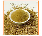 CORIANDER POWDER 100% Pure, Natural Premium Quality Grade A- Bio Breeze