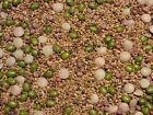 Salad Sprouting Microgreens 5 Seed Mix Alfalfa Broccoli Lentil Mung Radish     b