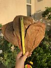 5/10/25 HUGE Catappa Indian Almond Leaves - Free Shipping!