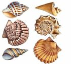 Seashell Sea Shell Ocean Select-A-Size Ceramic Waterslide Decals Tx image