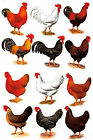 12 Rooster Hen Select Size Waterslide Ceramic Decals Bx image