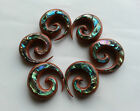 1 PAIR ORGANIC SAWO WOOD ABALONE SHELL SPIRALS EAR STRETCHER TAPER PLUGS GAUGES