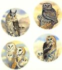 Owl Barn Little Long Eared Tawny Bird Select-A-Size Waterslide Ceramic Decals Bx image