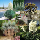 6 YUCCA varieties frost hardy 10, 50, 100, 500, 1000 seeds choice listing