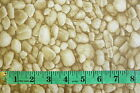 NATURE WORLD BY LECIEN - STONE / PEBBLES BEIGE 100% COTTON FABRIC