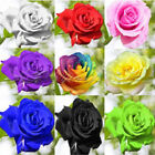 100Pcs Rare Rose Flower Seeds Lover Plants Home Garden Rainbow Multicolor Gift