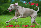 METALL-WARNSCHILD: WEIMARANER 2291