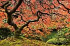 Marmont Hill Autumn Magnificence Photographic Print on Wrapped Canvas